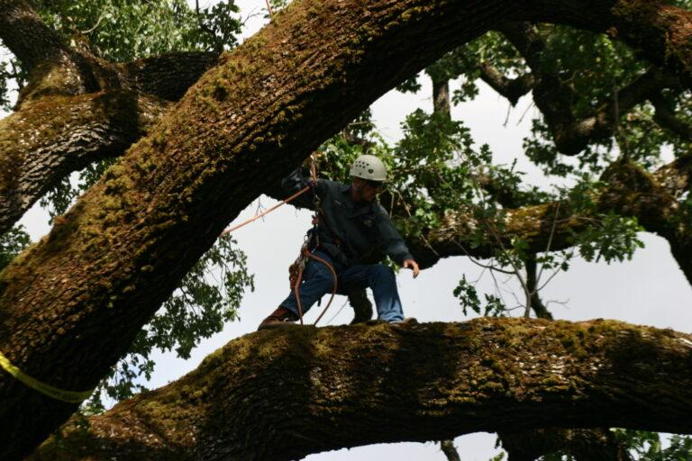 Tree Care Company employee Lauren Climbing