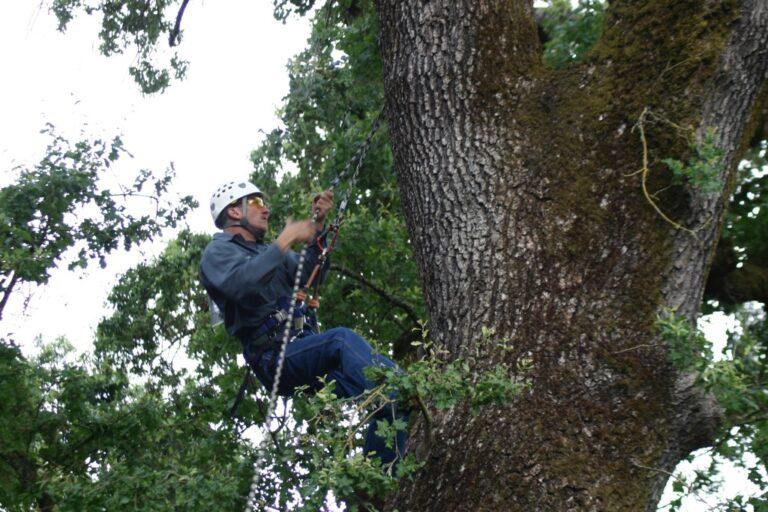 Tree Care Diagnosis Drilling
