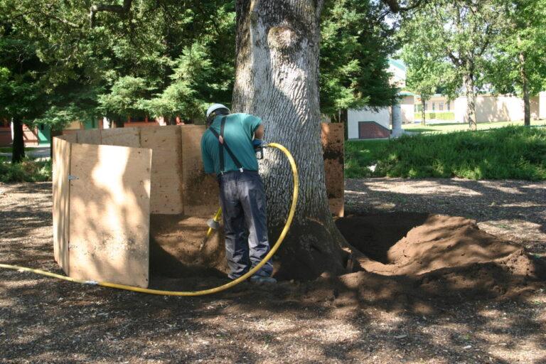 Root Crown Excavation