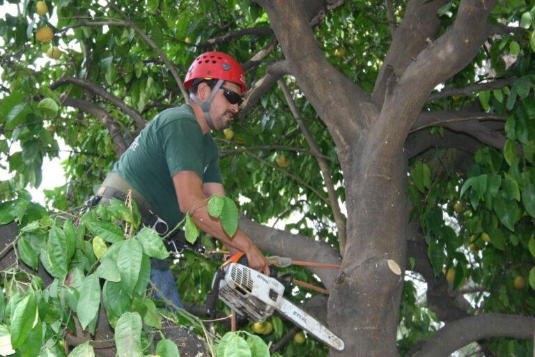 Tree Care Company Jorge